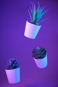 Zimmerpflanzen, succulents verschoben in der luft auf farbhintergrund