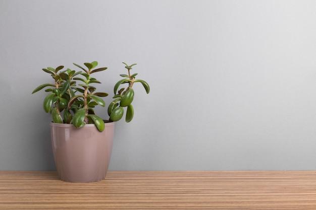 Zimmerpflanzen. sukkulenten