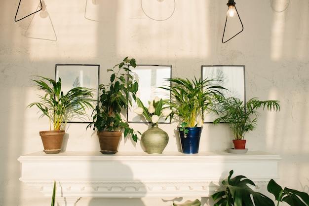 Zimmerpflanzen und blumen auf einem weißen kamin im dekor des hauses