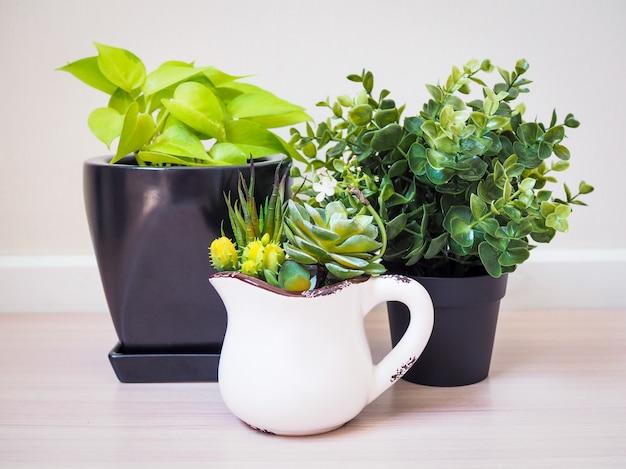 Zimmerpflanzendekorinnenraum zu hause. innenbaum in eingemachtem, um gesetzt auf einen bretterboden zu verzieren