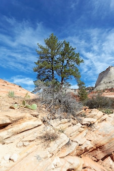 Zion national park, usa. malerische mehrfarbige klippen schaffen eine unvergessliche landschaft