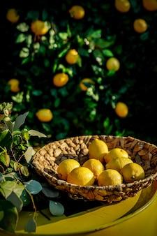 Zitronen in einem korb, grüner blumenhintergrund.
