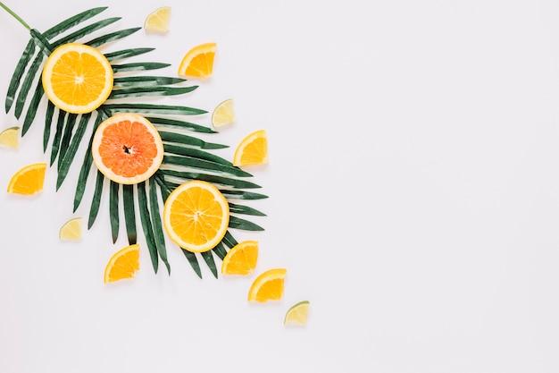 Zitrusfrüchte auf palmblättern