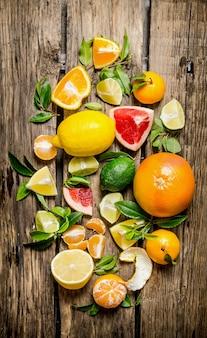 Zitrusfrüchte - grapefruit, orange, mandarine, zitrone, limette in scheiben geschnitten und ganz mit blättern