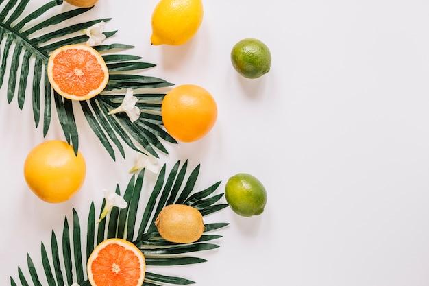 Zitrusfrüchte in der nähe von blättern und blüten