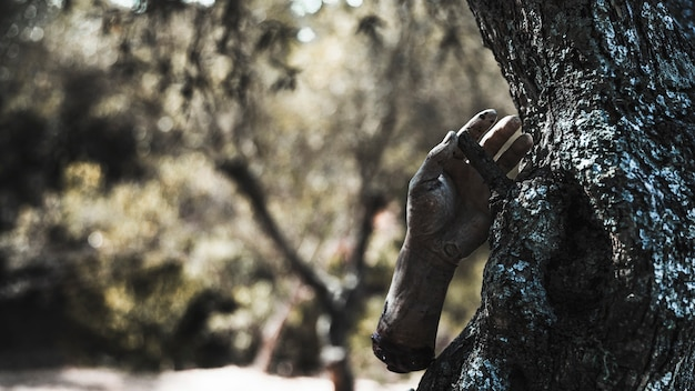 Zombiearm, der am baum im sonnigen wald hängt