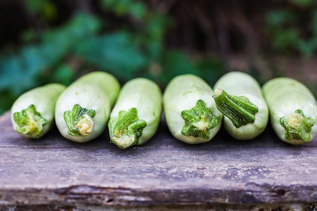 Zucchini früchte frische ernte nahrung