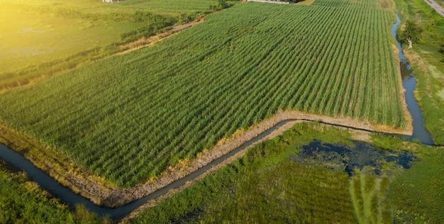 Zuckerrohr oder landwirtschaft im ländlichen ban pong, ratchaburi, thailand