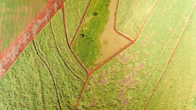 Zuckerrohrplantagenvogelperspektive mit sonnenlicht. landwirtschaftliche industrie.