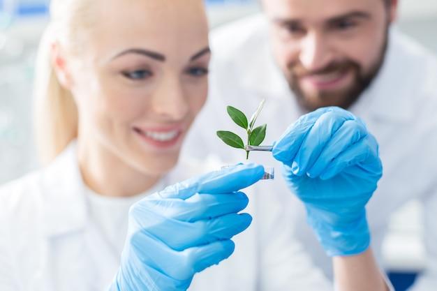 Zukünftiger baum. selektiver fokus eines grünen sprosses, der von positiv begeisterten professionellen biologen während der zusammenarbeit untersucht wird