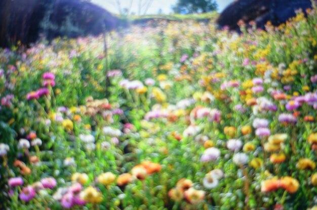 Zusammenfassung unscharfer naturblumen-blütenbaumast mit sonnenaufganghintergrund.