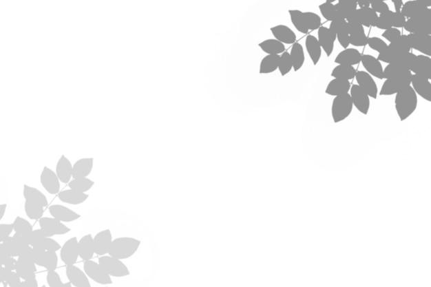 Zusammenfassung verlassen schatten schwarzweiss-blattschatten auf einem weißen wandhintergrund. leerer kopienraum.