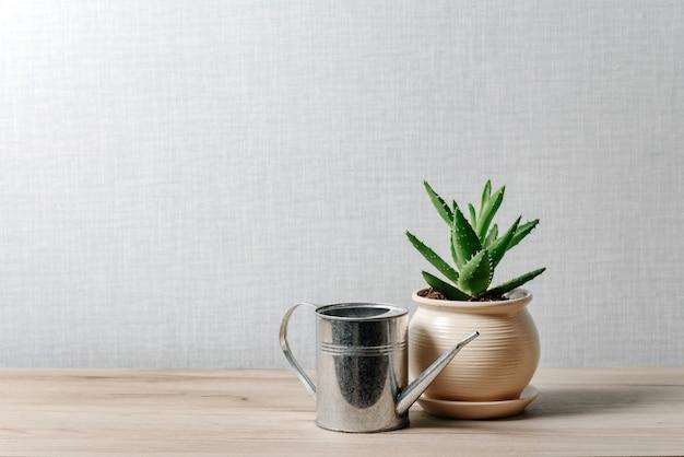 Zusammensetzung mit aloe-blume in einem keramiktopf und metallbewässerung