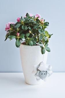 Zusammensetzung mit eingemachter azaleenblume im weißen vase