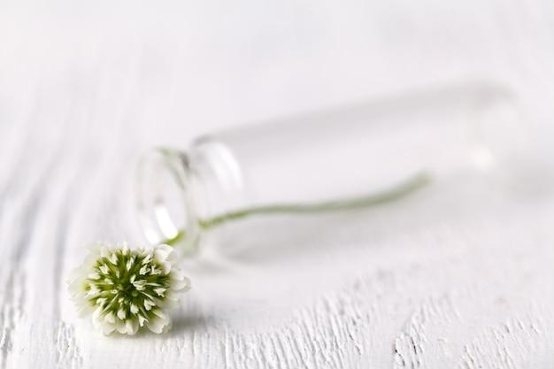 Zusammensetzung mit klee in glas. melancholisches stillleben mit weißklee