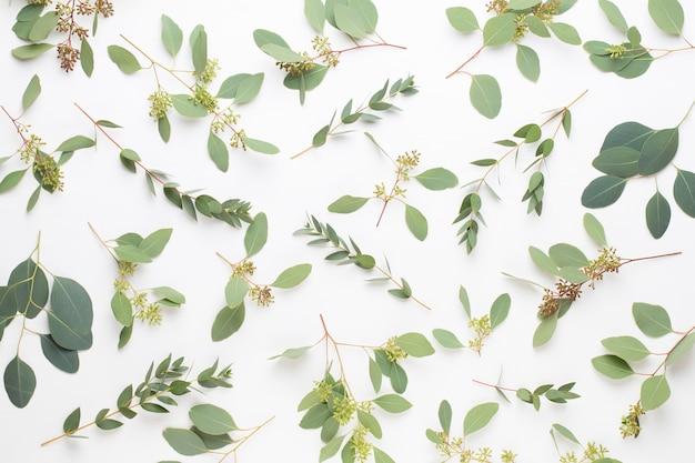 Zusammensetzung von blumen und eukalyptus. muster aus verschiedenen bunten blumen auf weißem hintergrund. flach lag stiil leben.