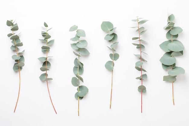 Zusammensetzung von blumen und eukalyptus
