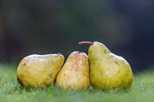 Zusammensetzung von drei gelben birnen im frischen gras verwischte das verwischte dunkelgrün.