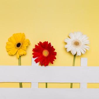 Zusammensetzung von hellen blumen und von dekorativem zaun auf gelber oberfläche