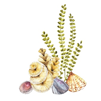 Zusammensetzungs-meerespflanzenseeleben- und -korallengegenstand lokalisiert auf weißem hintergrund. gemalte illustration des aquarells hand gezeichnete.