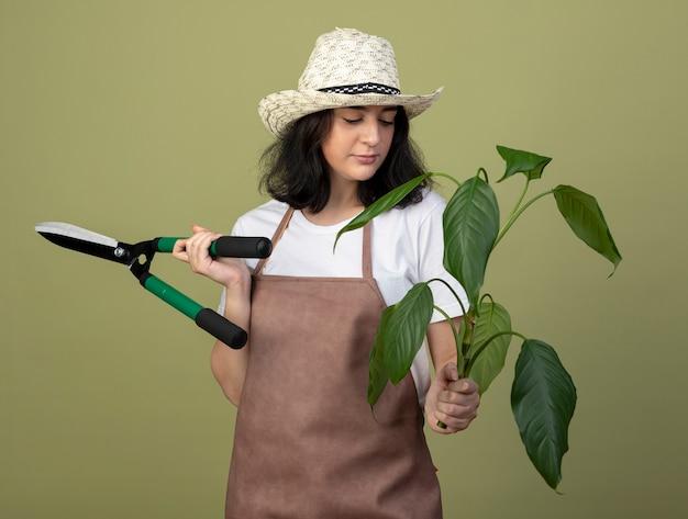 Zuversichtlich junge brünette weibliche gärtnerin in uniform mit gartenhut hält gartenschere und betrachtet pflanze isoliert auf olivgrüner wand