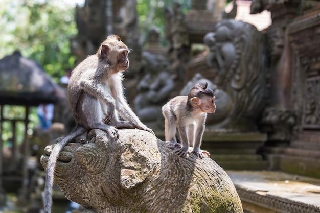 Zwei affen, die auf einer tempelverzierung in bali, ansicht in den dschungel betrachtend stehen