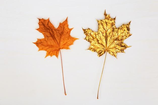 Zwei ahornblätter, eines natürlich gelb oder orange, das andere goldfarben auf hellem betonhintergrund. herbstkonzept.