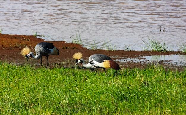Zwei alte krane am ufer. sweetwater, kenia