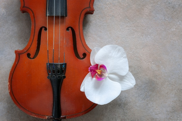 Zwei alte violinen und weiße orchideenblume. draufsicht, nahaufnahme auf hellem konkretem hintergrund
