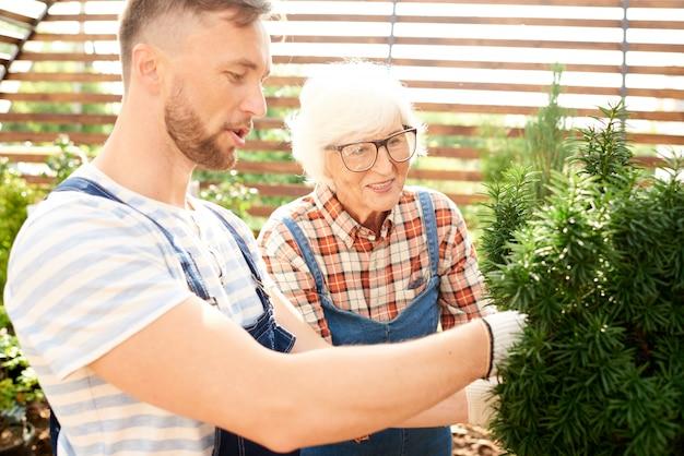 Zwei arbeiter, die sich um pflanzen kümmern