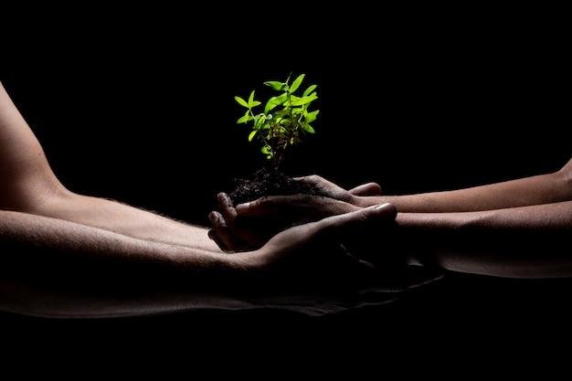 Zwei arme, die ein junges grünpflanzewachsen anhalten. schwarzer hintergrund