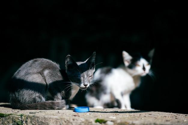 Zwei arme obdachlose landstreicher kranke städtische unglückliche kleine katzen, die zusammen im sommertag unter brücke sitzen und sich umsehen. haustiere im freien. ungesunde straßenkätzchen leben. hungrige tiere