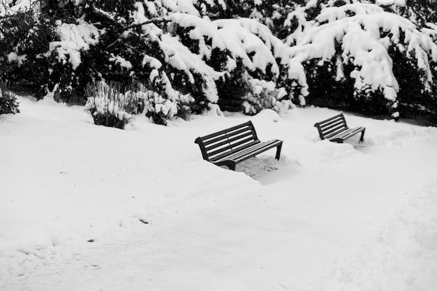 Zwei bänke im winterpark