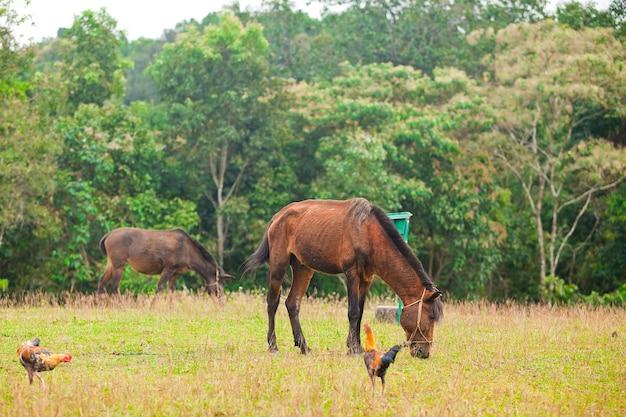 Zwei braune pferde auf grüner wiese