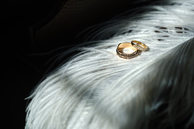 Zwei eheringe liegen in weißen federn. das konzept der liebe.