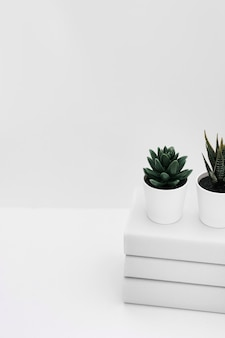 Zwei eingemachte kaktuspflanze über dem staplung der bücher getrennt auf weißem hintergrund