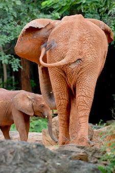 Zwei elefanten bilden die rückseite