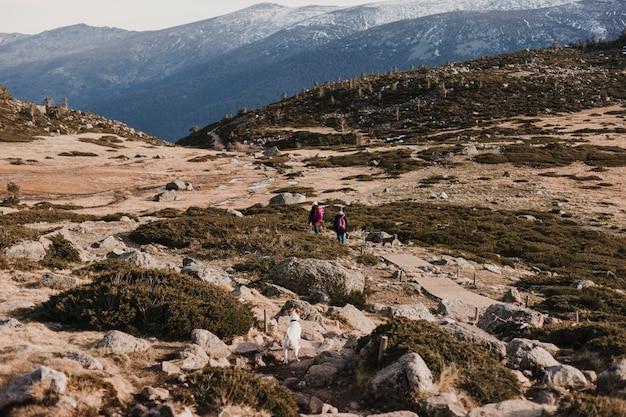 Zwei erfolgreiche wandererfreundinnen genießen die aussicht auf die bergspitze. glückliche wanderer, die in natur gehen
