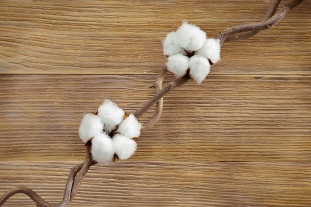 Zwei flauschige baumwollpflanzenblumen auf zweig auf naturholzschreibtisch. draufsicht. selektiver fokus. hintergrund für spa-konzept.