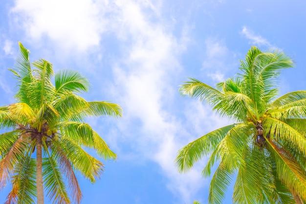 Zwei flauschige kokospalmen blauer himmelshintergrund reisetourismus asien kopie raum