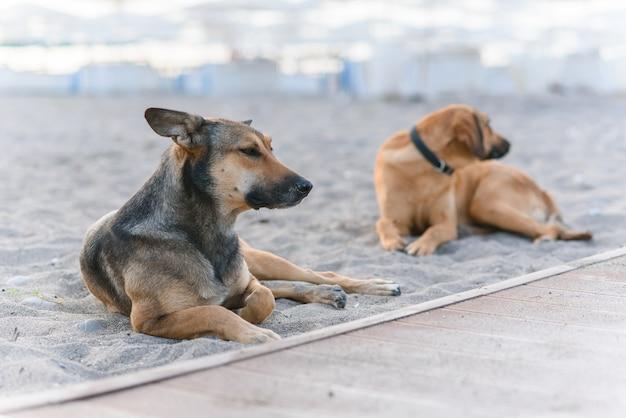 Zwei freundliche hunde entspannen am tropischen sandstrand in der nähe des blauen meeres.
