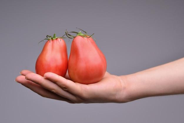 Zwei frische reife rote tomaten, die von einem schwarzen hintergrund der hand gehalten werden, lokalisiert auf schwarzem
