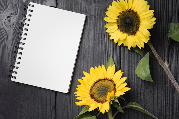 Zwei gelbe sonnenblumen mit leerem gewundenem notizbuch auf holztisch