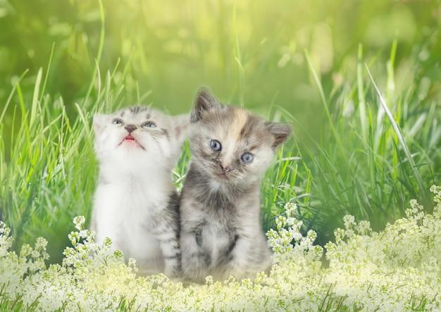 Zwei gestreifte kätzchen, die im gras sitzen