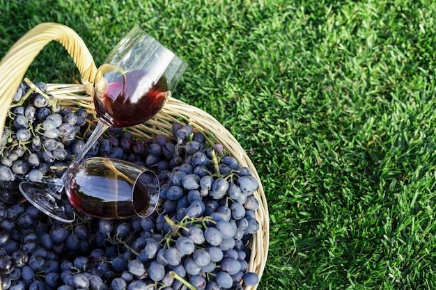 Zwei gläser rotwein im korb der frischen traubenernte auf rasen, grünes gras draußen. weinprobe im weinberg