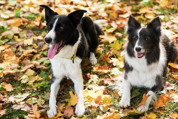 Zwei glückliche hunde unter herbstlichen blättern