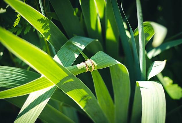 Zwei goldene eheringe auf dem grünen blatt.