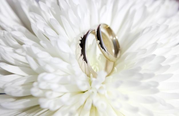 Zwei goldene eheringe auf einer großen weißen chrysanthemenblume