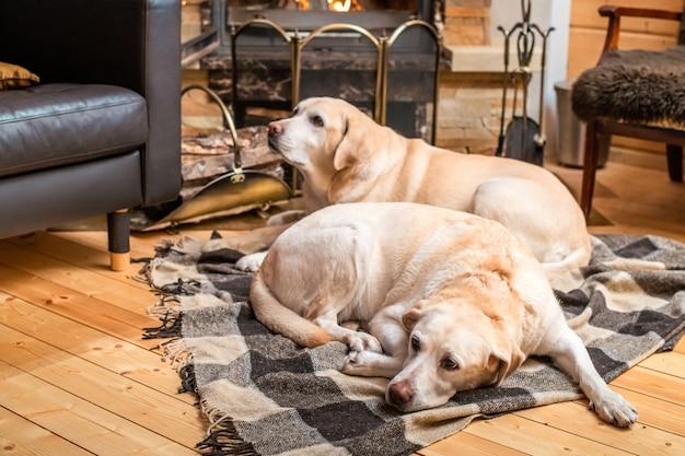 Zwei goldene labrador retriever-hunde liegen auf einer decke vor dem kamin in einem landhaus.