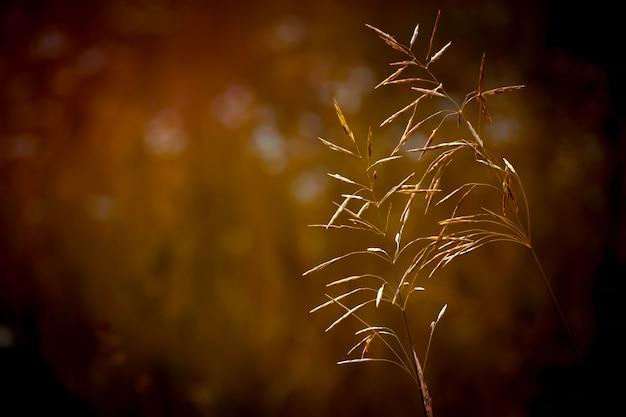 Zwei grashalme auf verschwommenem hintergrund mit braunem filter
